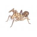 Diseño Hormiga