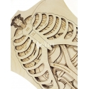 Anatomy for Laser Cutting