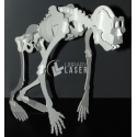 Esqueleto de Mono Diseño