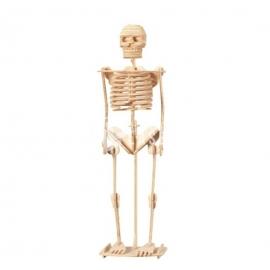 Esqueleto Diseño