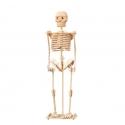 Skeleton Design